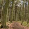 Waldführung durch das Lechlumer Holz